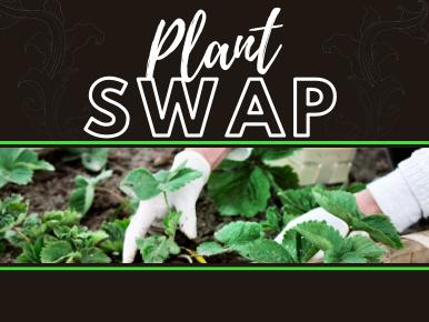 Fall Plant Swap